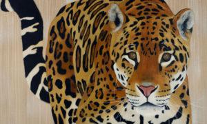 Panthera Onca par Thierry Bisch