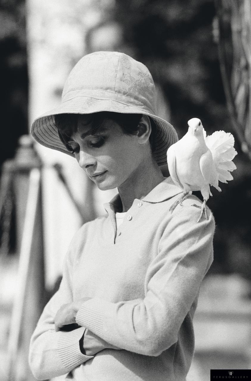 Hepburn With Dove by Terry O'Neill © Terry O'Neill / Iconic Images